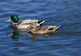 Photo:Some feathered friends at Cushlough, Ballinrobe